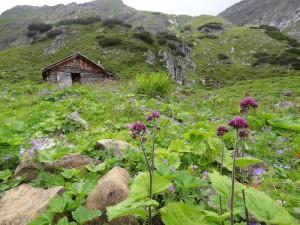 Juliblüte mit Milchlattich und Farn vor der Parzinnhütte